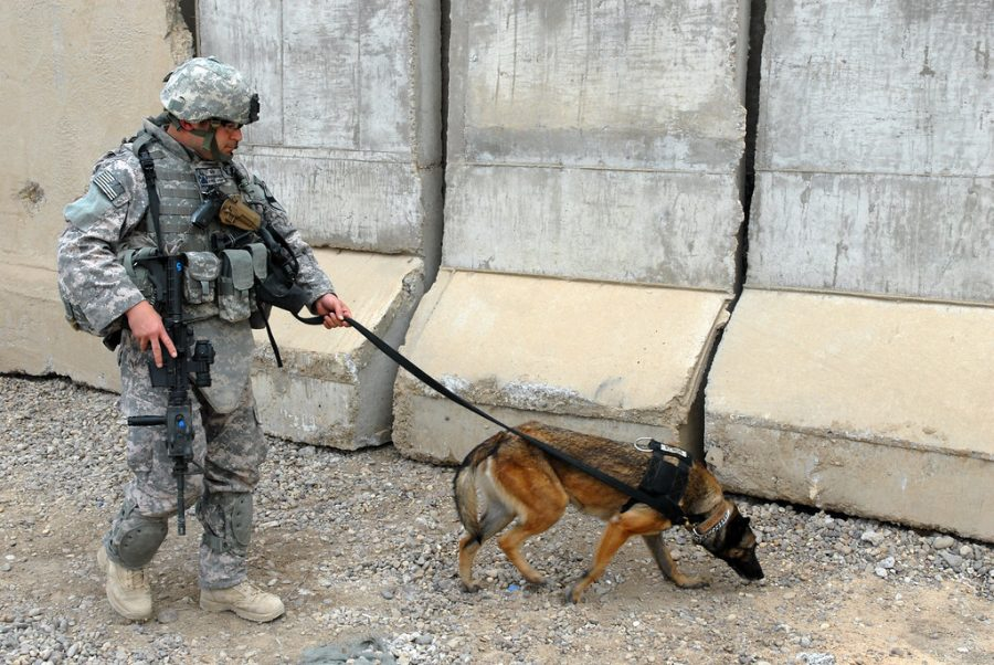A military working dog team patrolling a territory. This is the type of team used in the operations to fight ISIS.