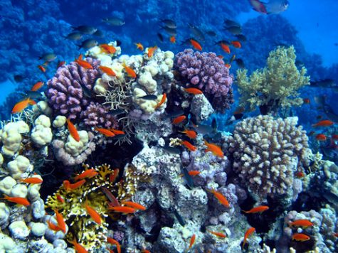 Without coral reefs, the sea creatures that inhabit the reefs will be homeless and will have to find new ways to survive and find food.