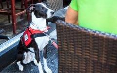 Emotional support dogs are allowed in public places, but not as many as service dogs.