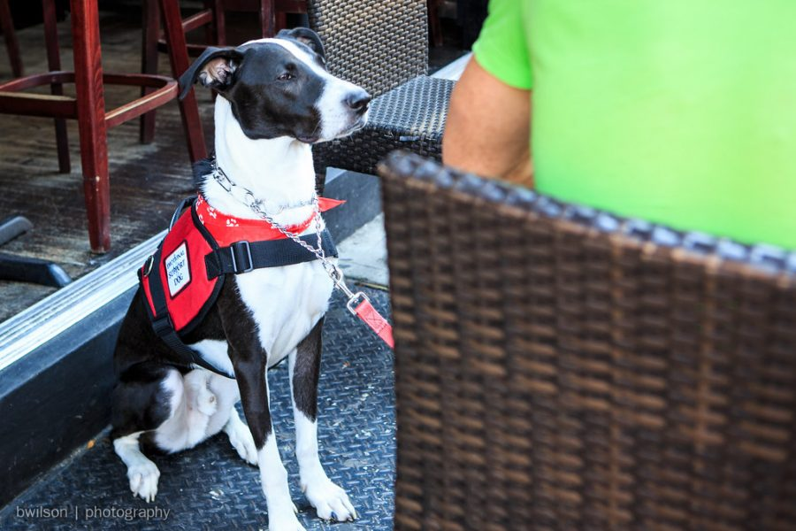 Emotional+support+dogs+are+allowed+in+public+places%2C+but+not+as+many+as+service+dogs.